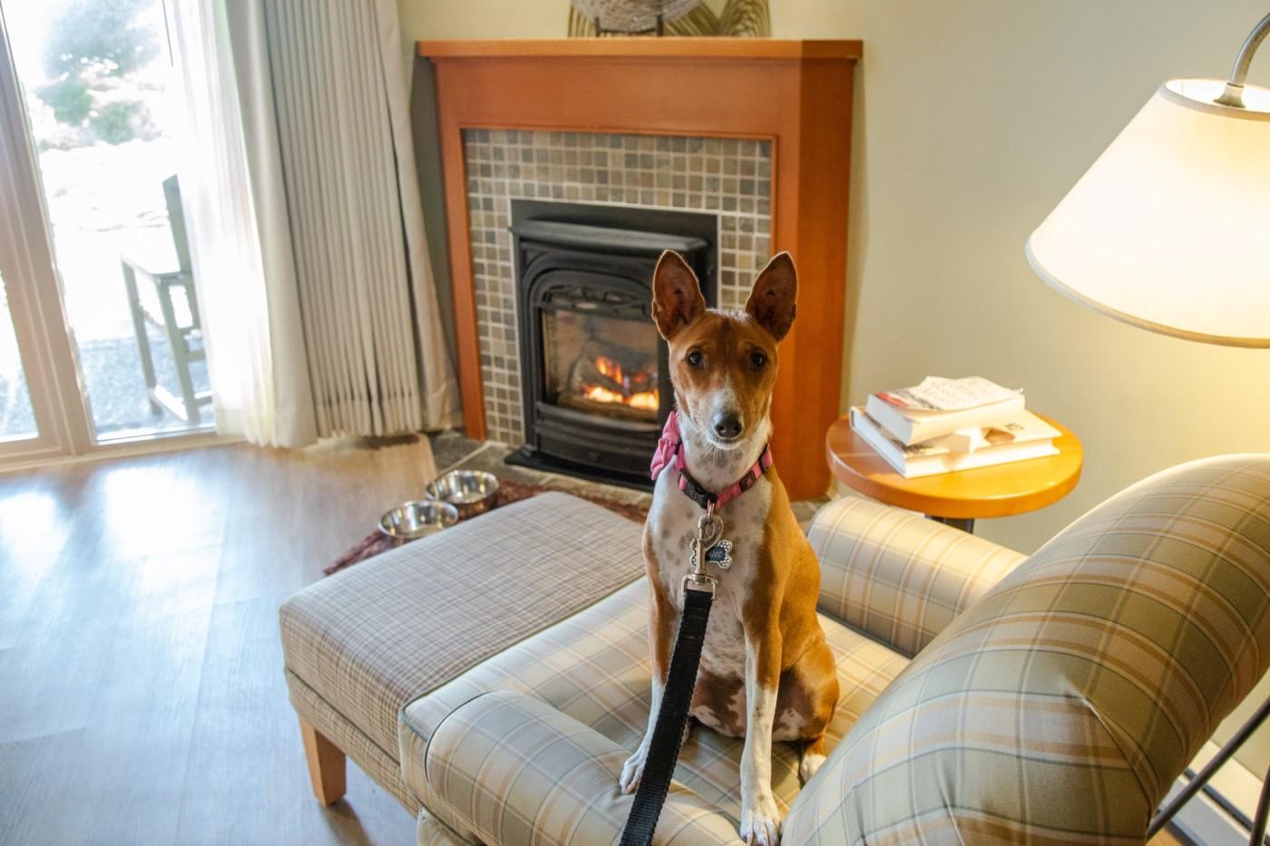 Long Beach Lodge Resort Tofino | Pet Friendly
